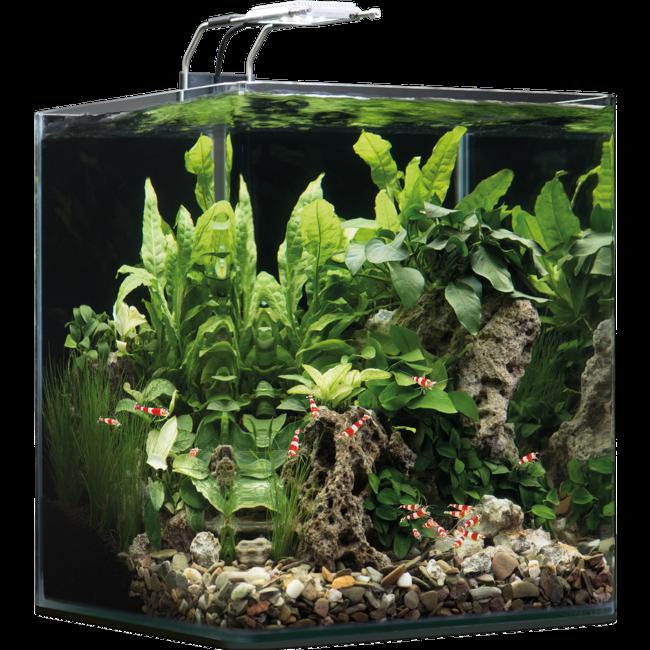 Nanocube® Équipé Aquarium Avec Litres Dennerle Tout Substrat 30 wP8k0On