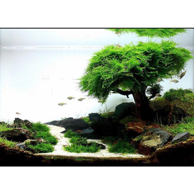 avis aquarium Zolux Aqua Clear50 + déco 4260092572656_1