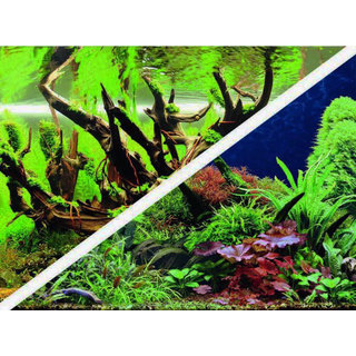 Poster Green Secret / Wood Island 60x30cm - Hobby