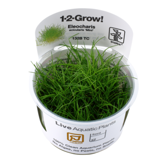 Eleocharis acicularis 'Mini' 1-2-Grow !