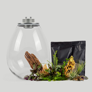 Kit BAIOSPHERE XL Matt Silver Edition - Lampe Terrarium