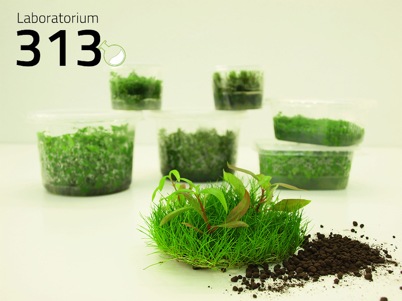 Laboratorium 313 - plantes in vitro pour aquarium